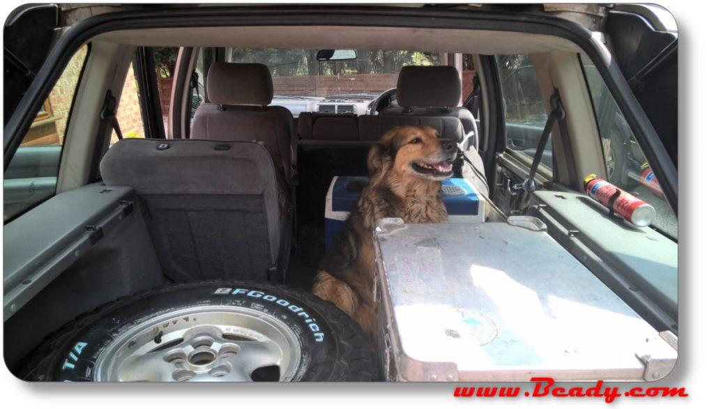Bialey the garage dog